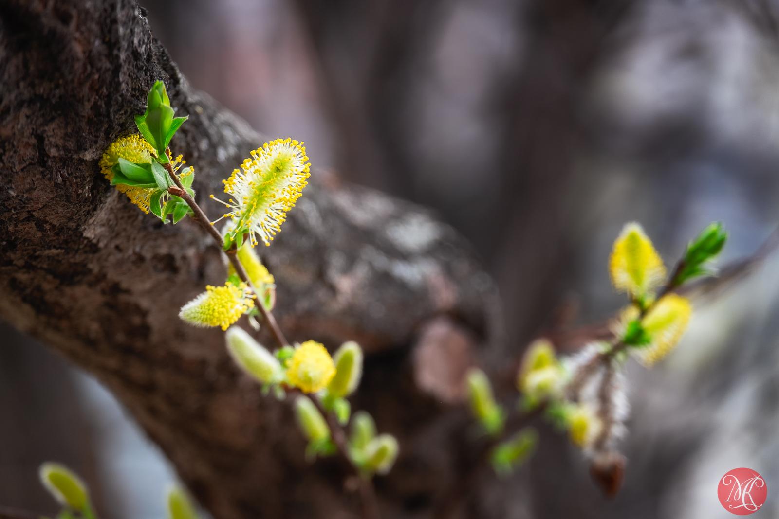 Spring magic 3