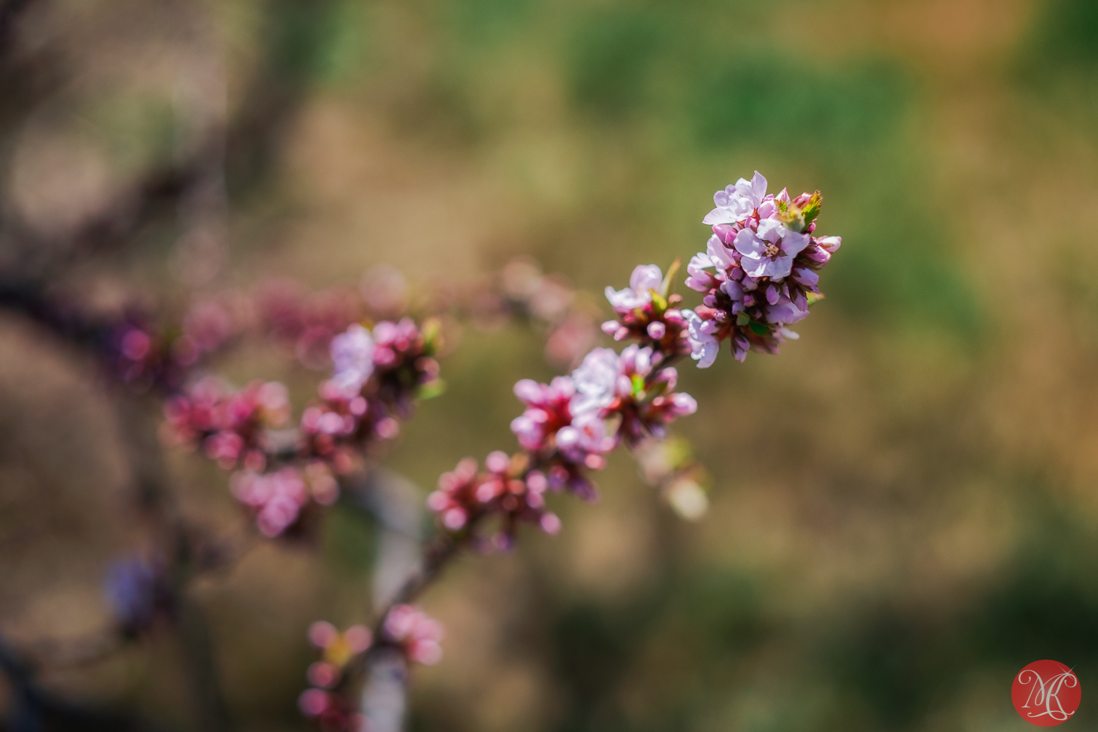 Spring magic 11