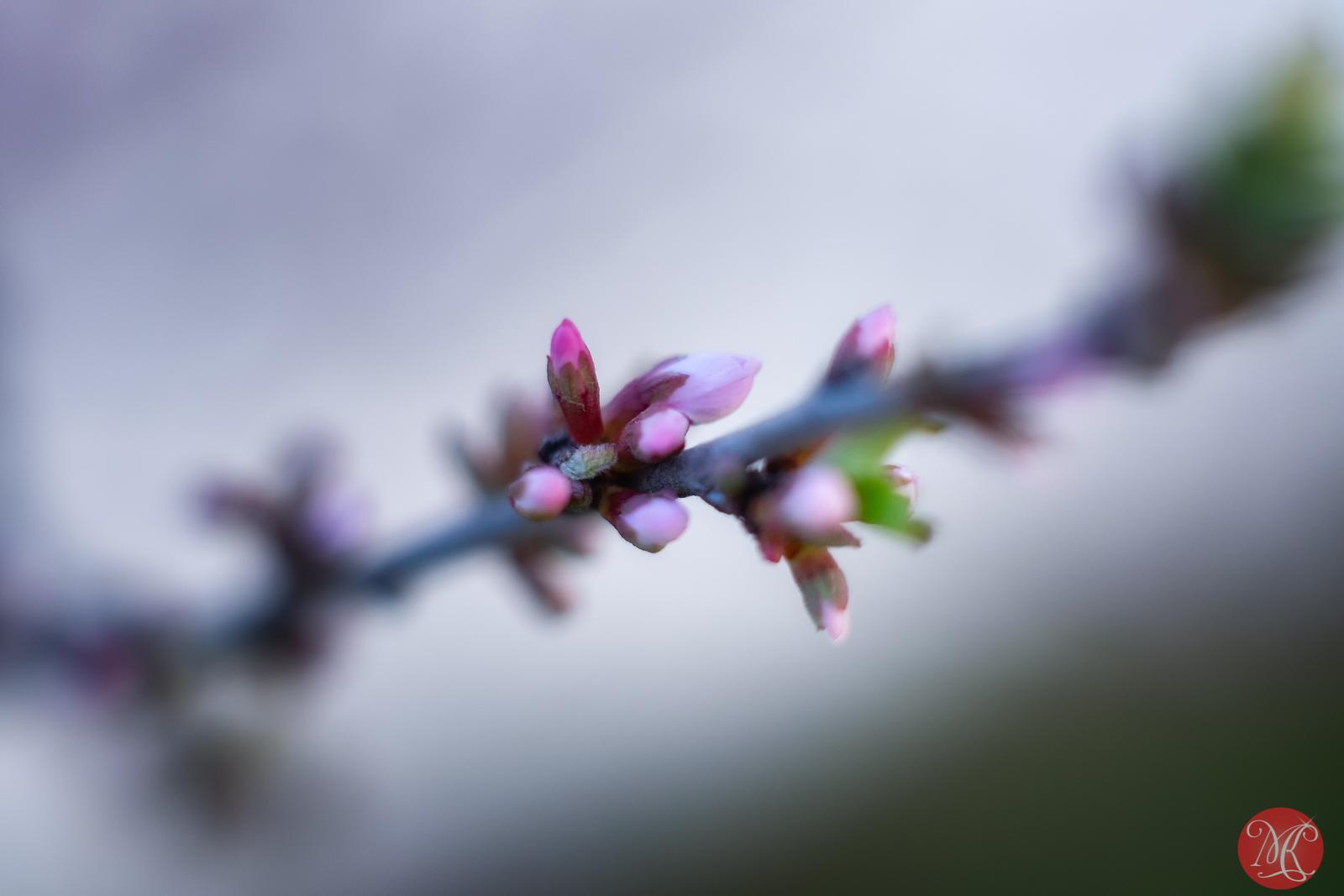 Spring magic 20