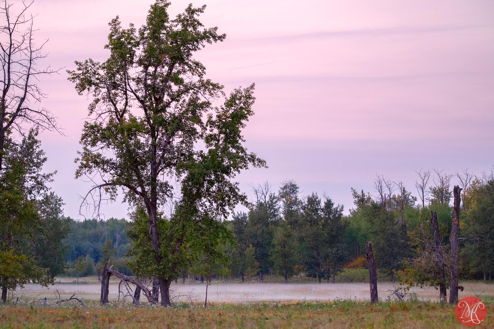 Evening mists
