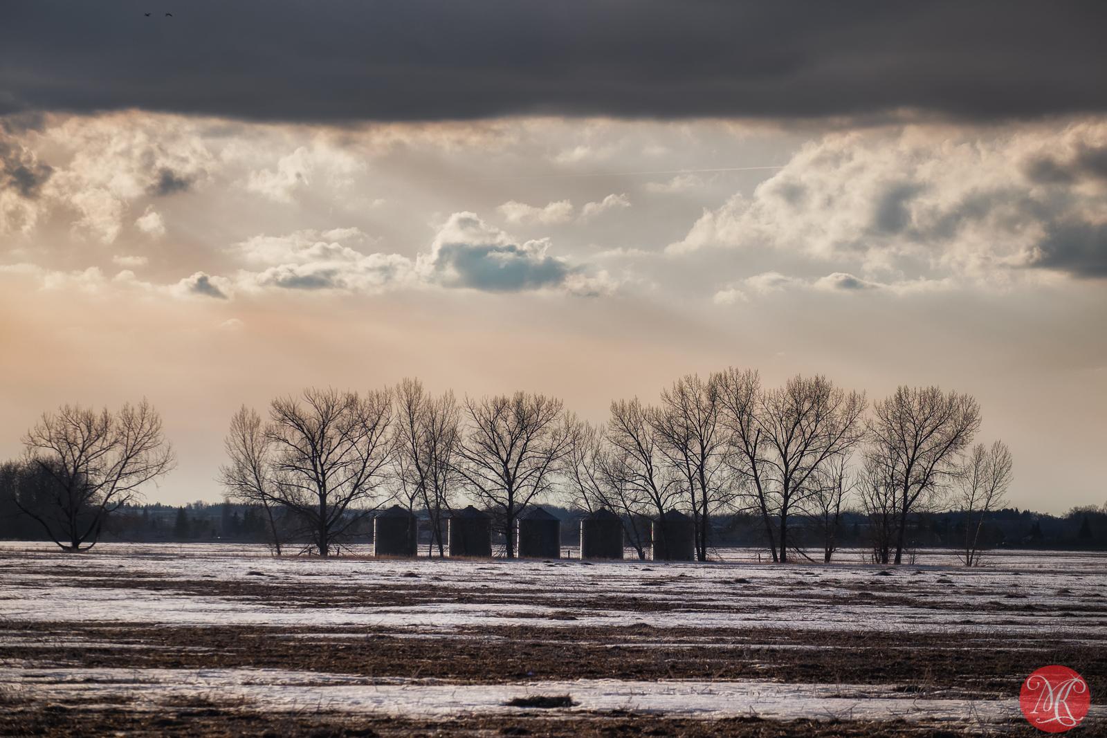 Afternoon on the prairies 2