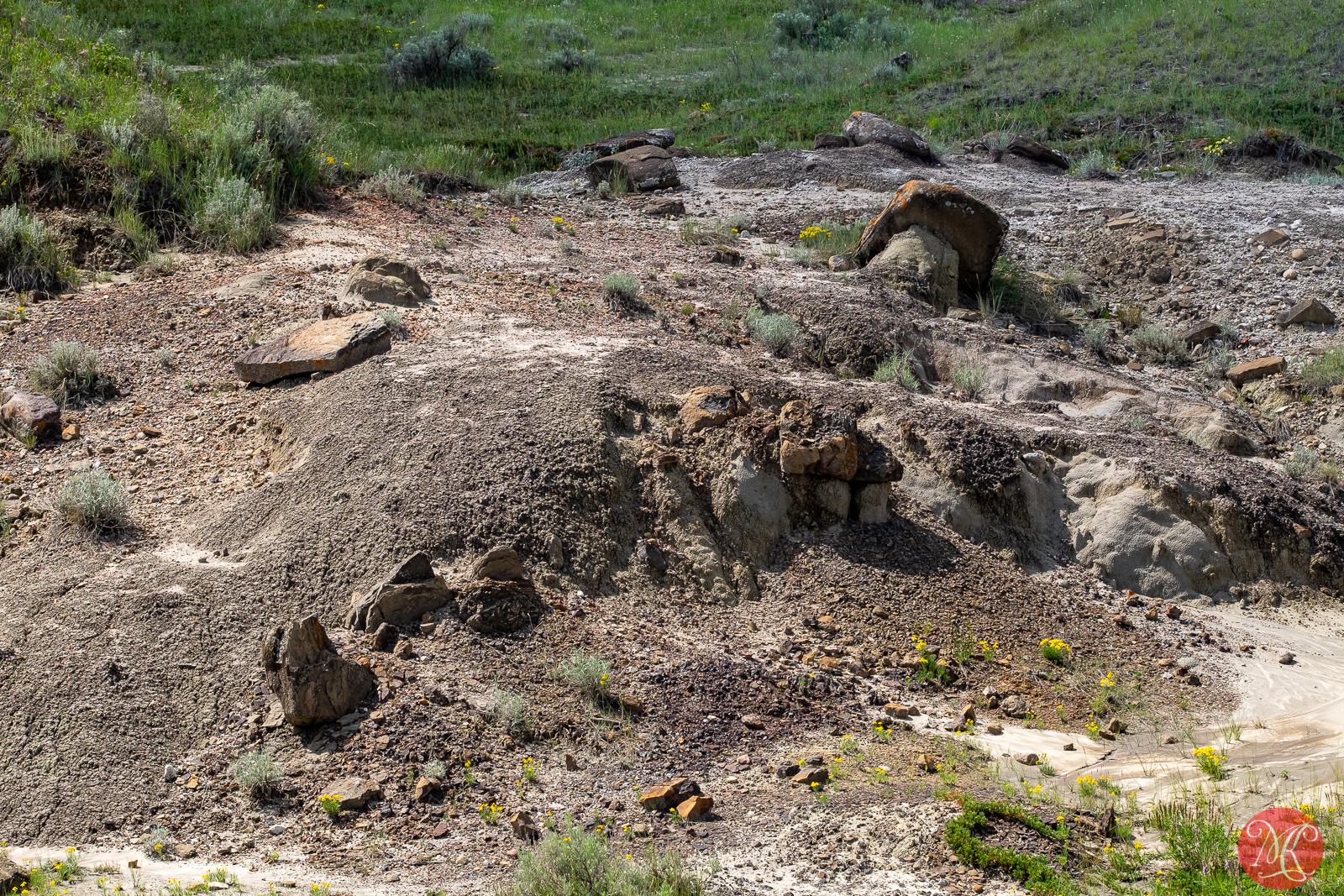 Dry Island 19