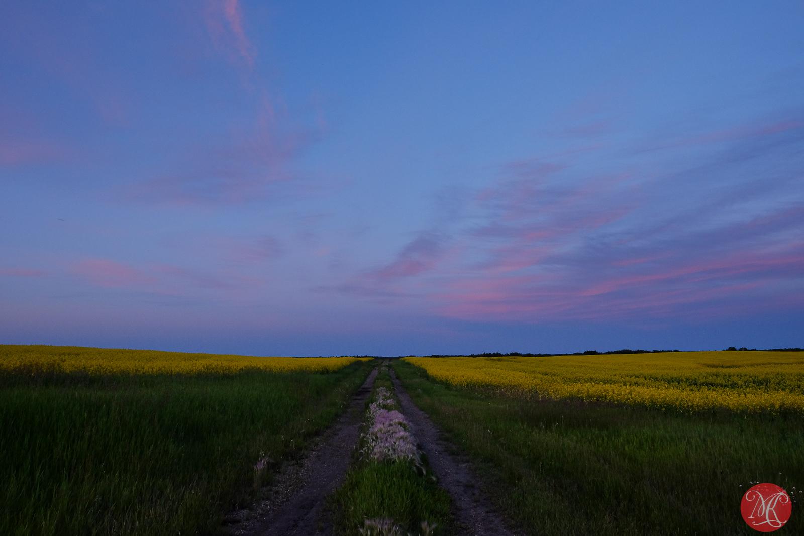 Canola Sunset