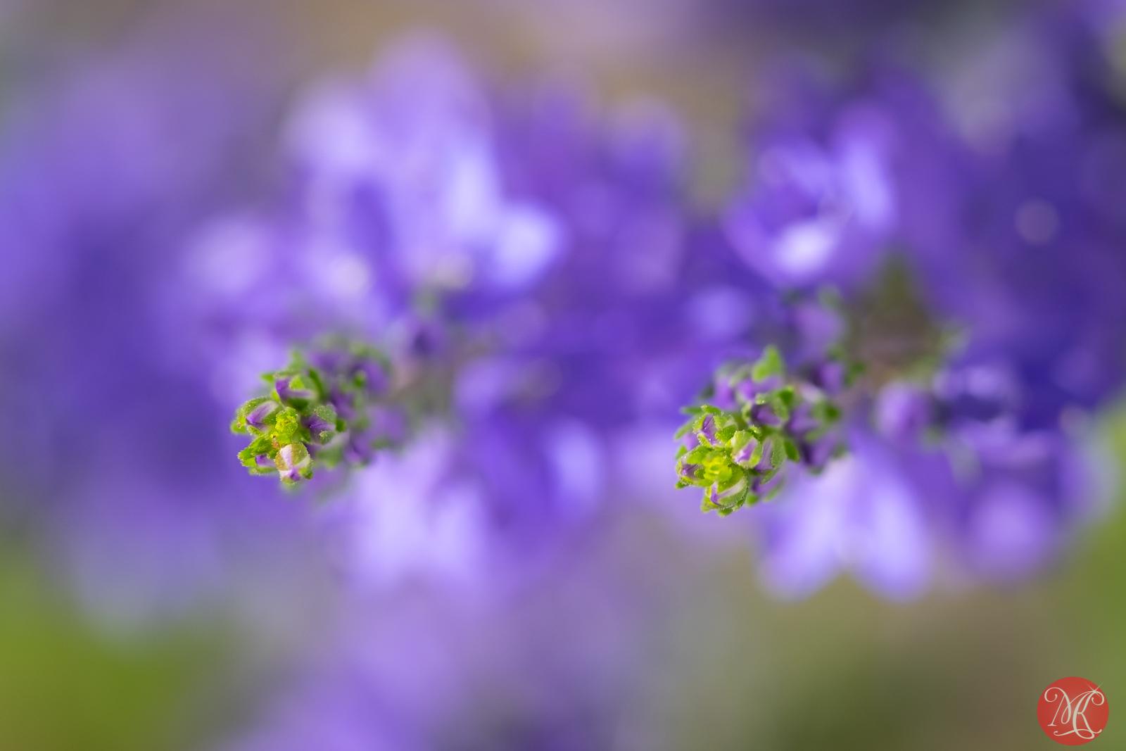 Summer blooms 3