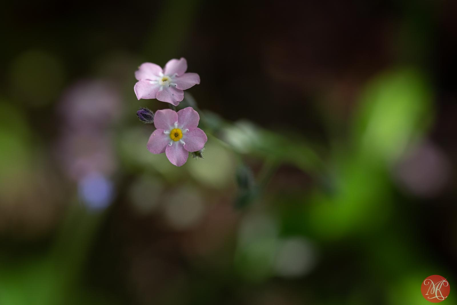 Summer blooms 5