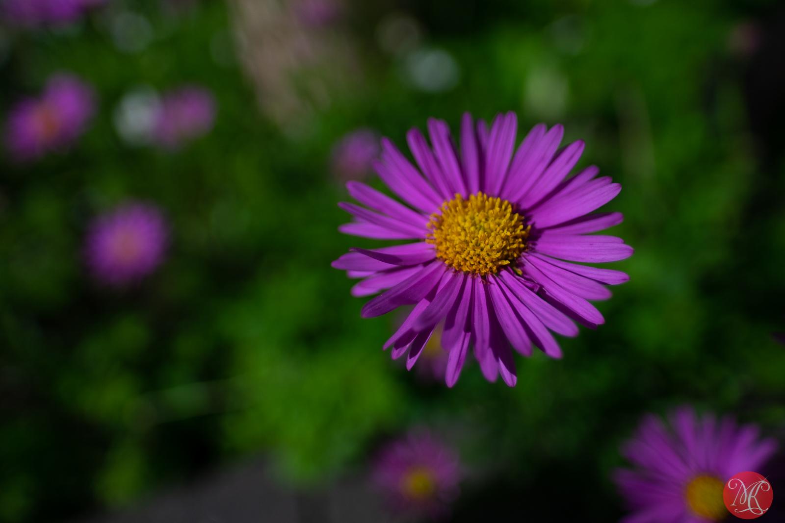 Summer blooms 6