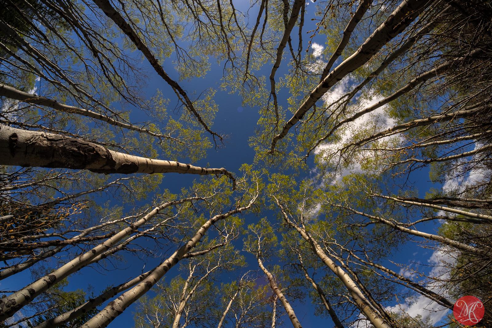 Fabulous trees