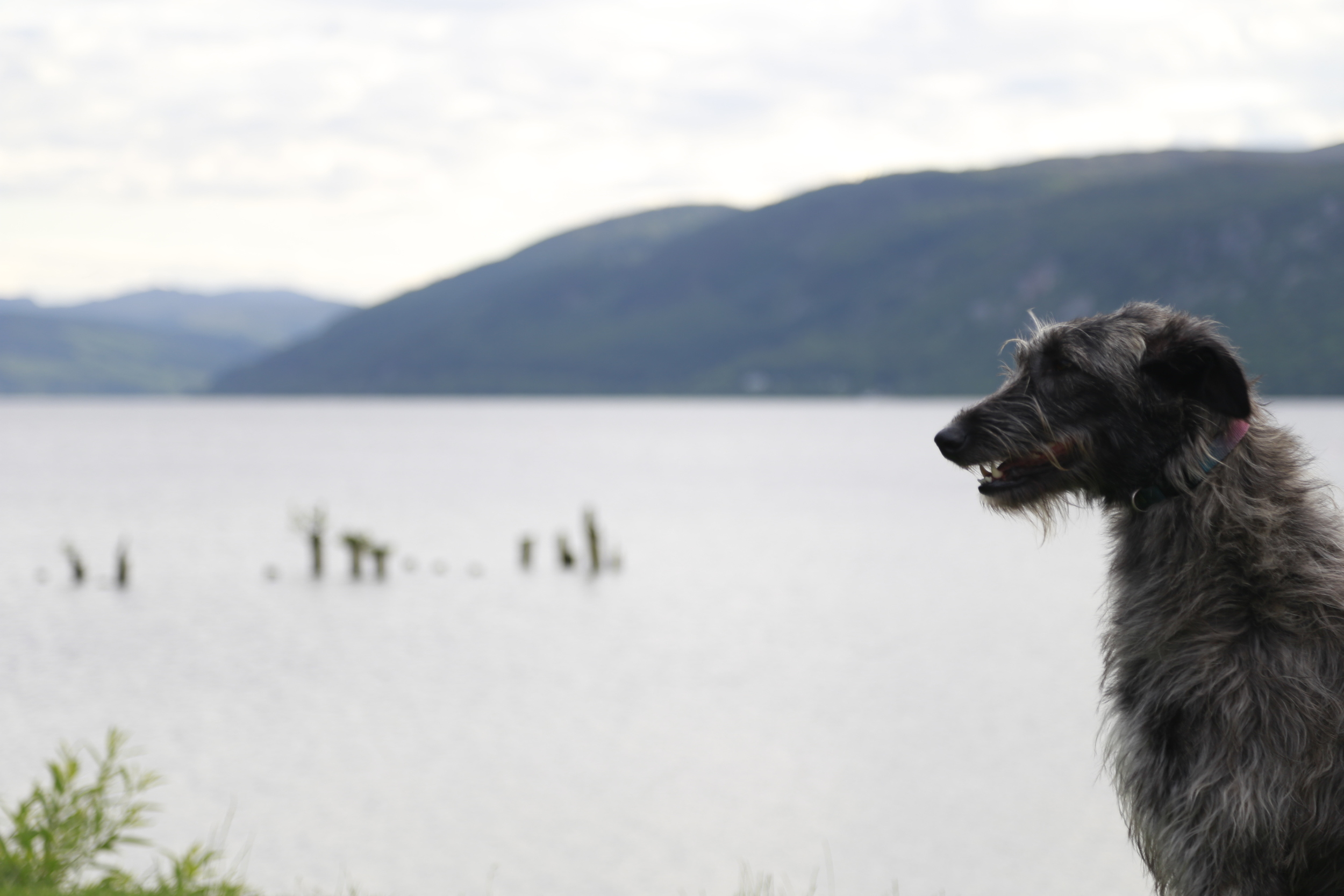 loch ness, loch, scotland, dog, bicycle touring
