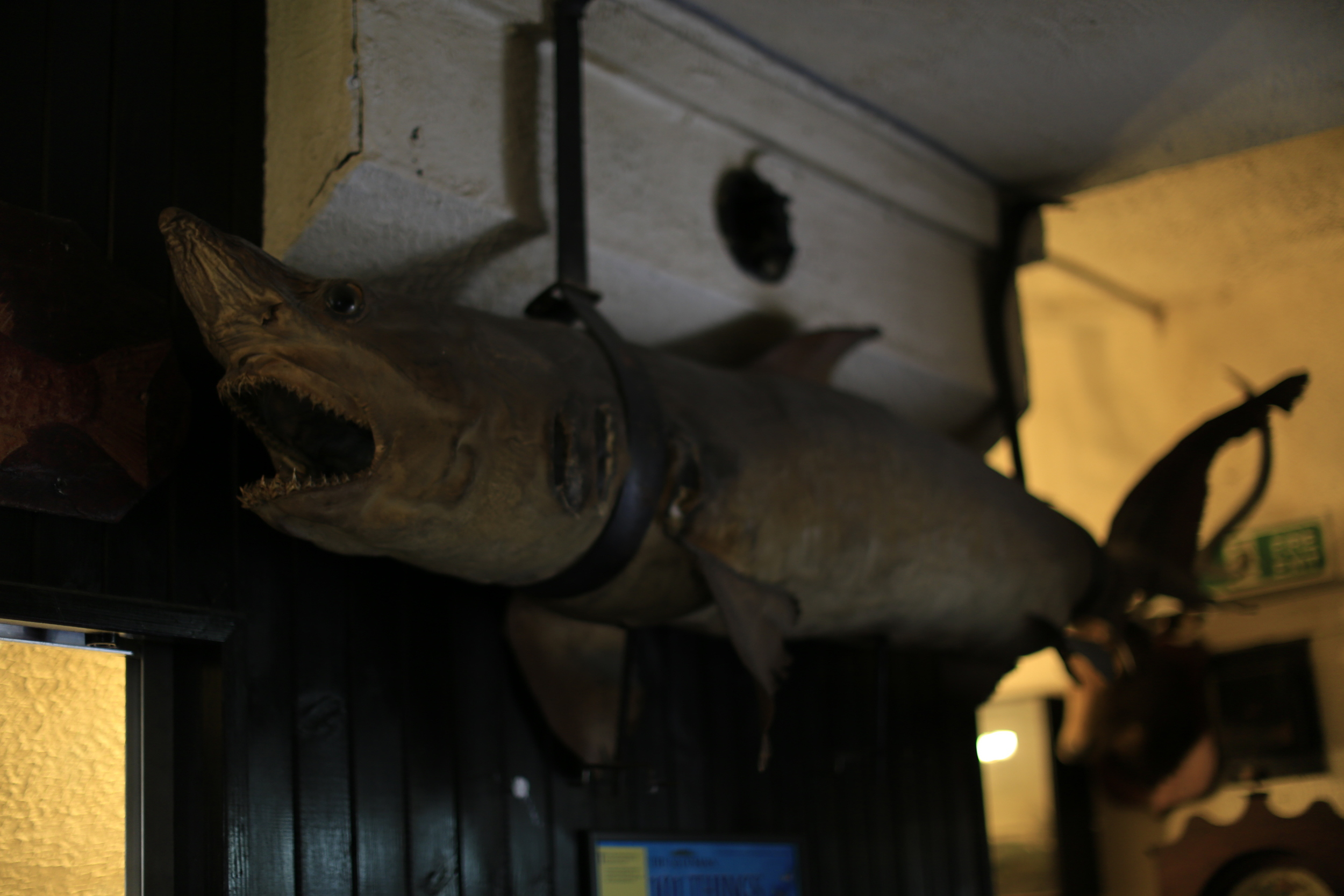 scotland, haunted hotel, stuffed shark, shark, weird, photography, canon, canon 6d, 6d