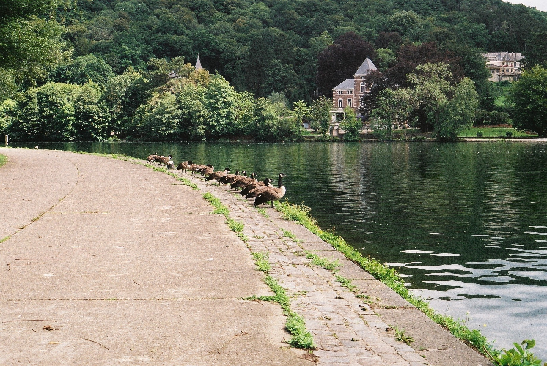 brussels, ducks, photography blog, travel blog, canon, canon ae-1, film blog, film photography, bicycle touring apocalypse, 35mm, bicycle touring, bikepacking, Canon, Canon ae-1, film camera, 35mm, no filter, travel, bicycle touring, bikepacking, travel, travel blog, leica