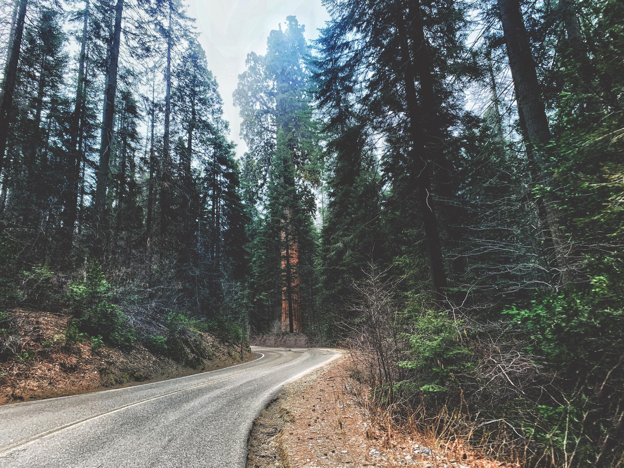 Sequoia_01.jpg
