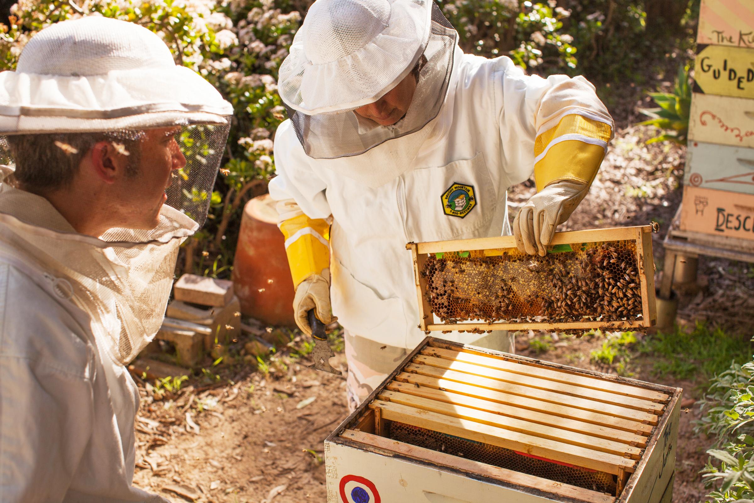 Bees-5 copy.jpg