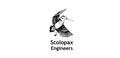 scolopax.jpg