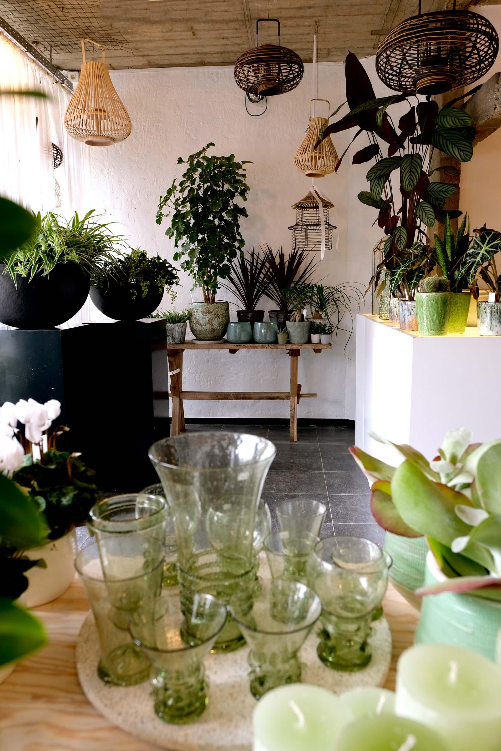 Urban jungle store - Degrootebloemen.be