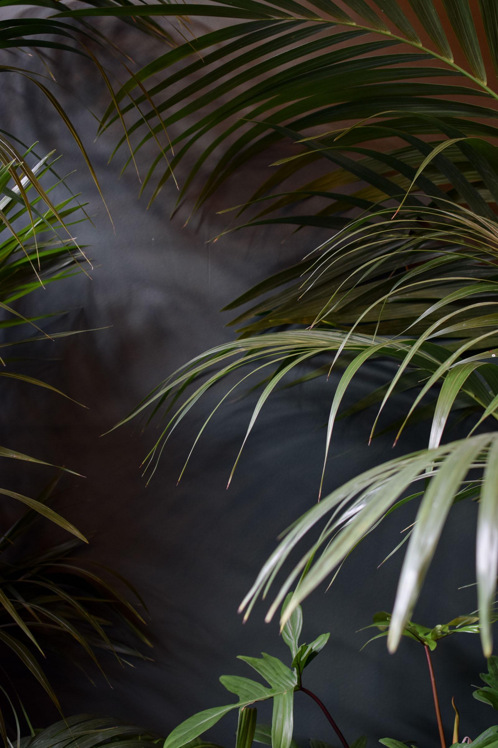 Junglefever-19.jpg