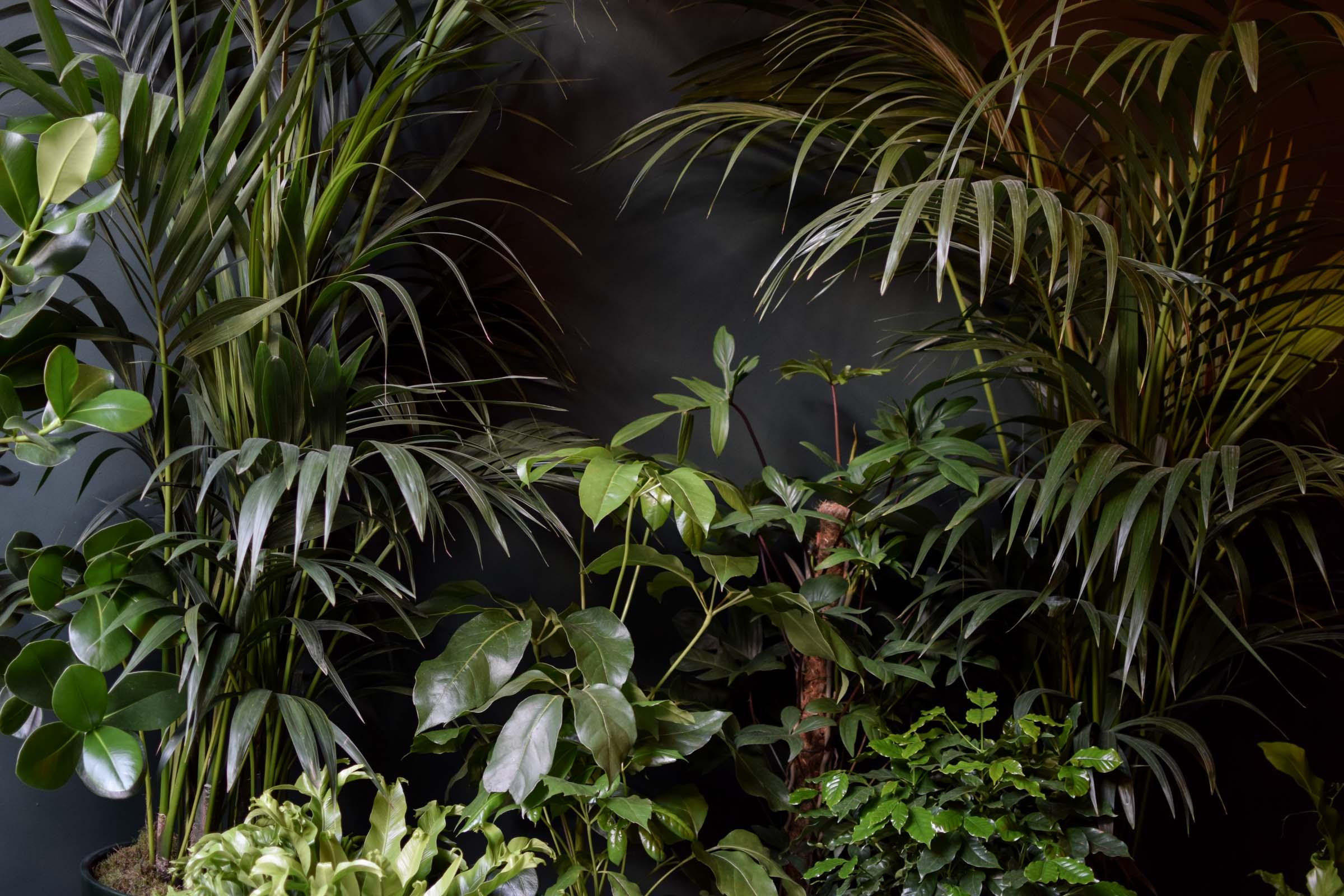 Junglefever-4.jpg