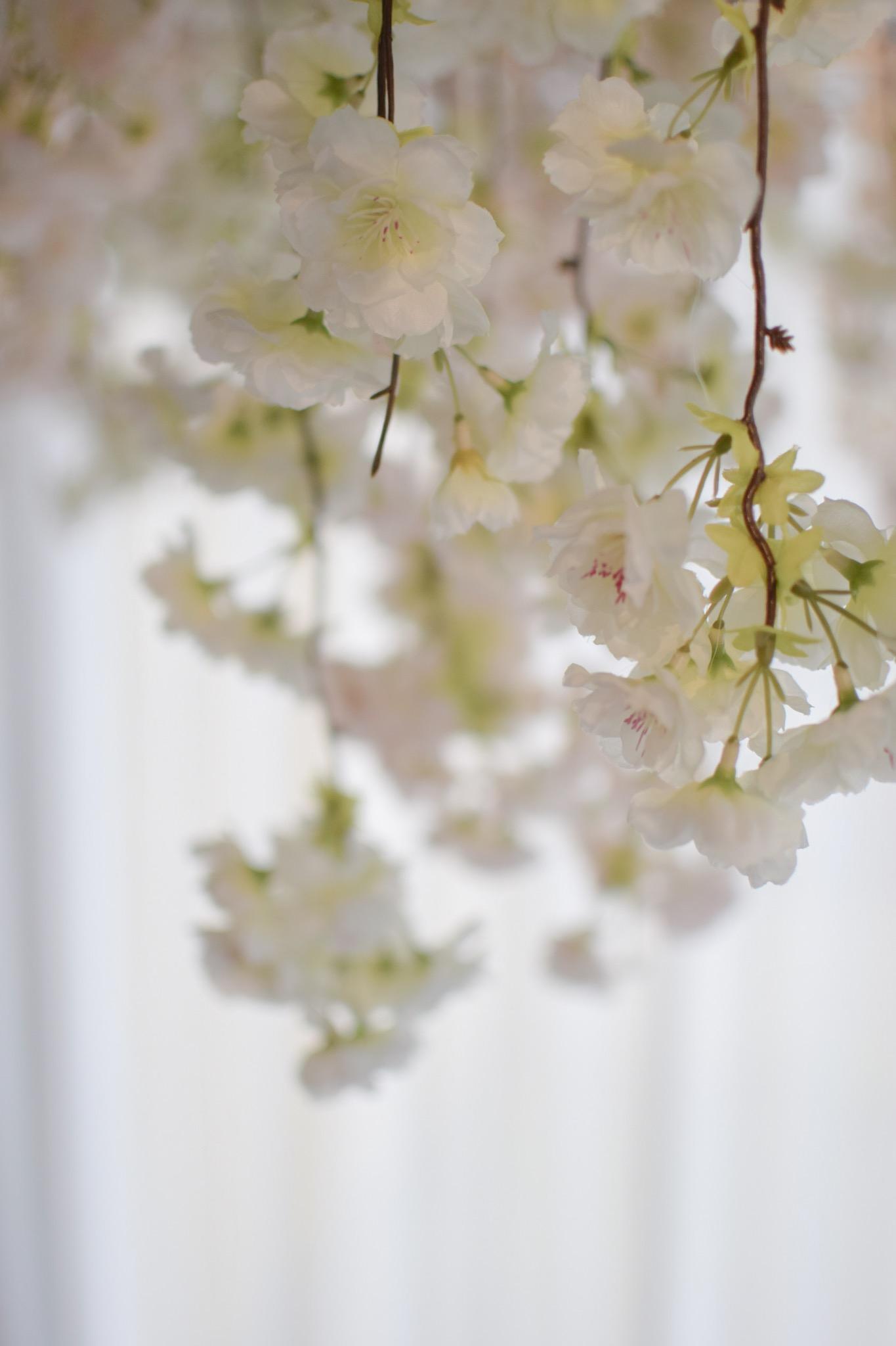 Bloesemplafond - Degrootebloemen.be