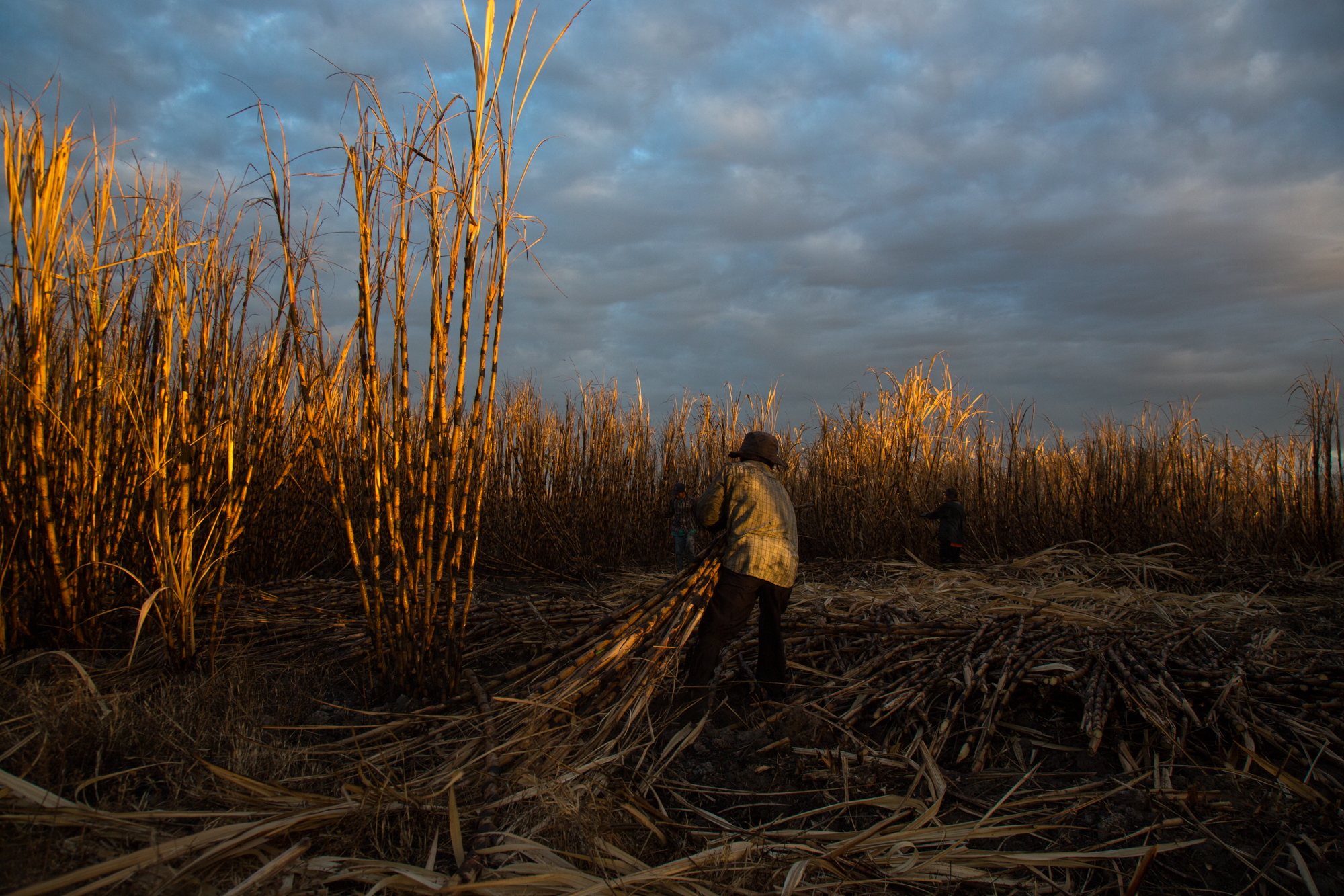 A man drags cut sugarcane in the early morning at the La Carrera plantation near the Bay of Juiquilisco, El Salvador.