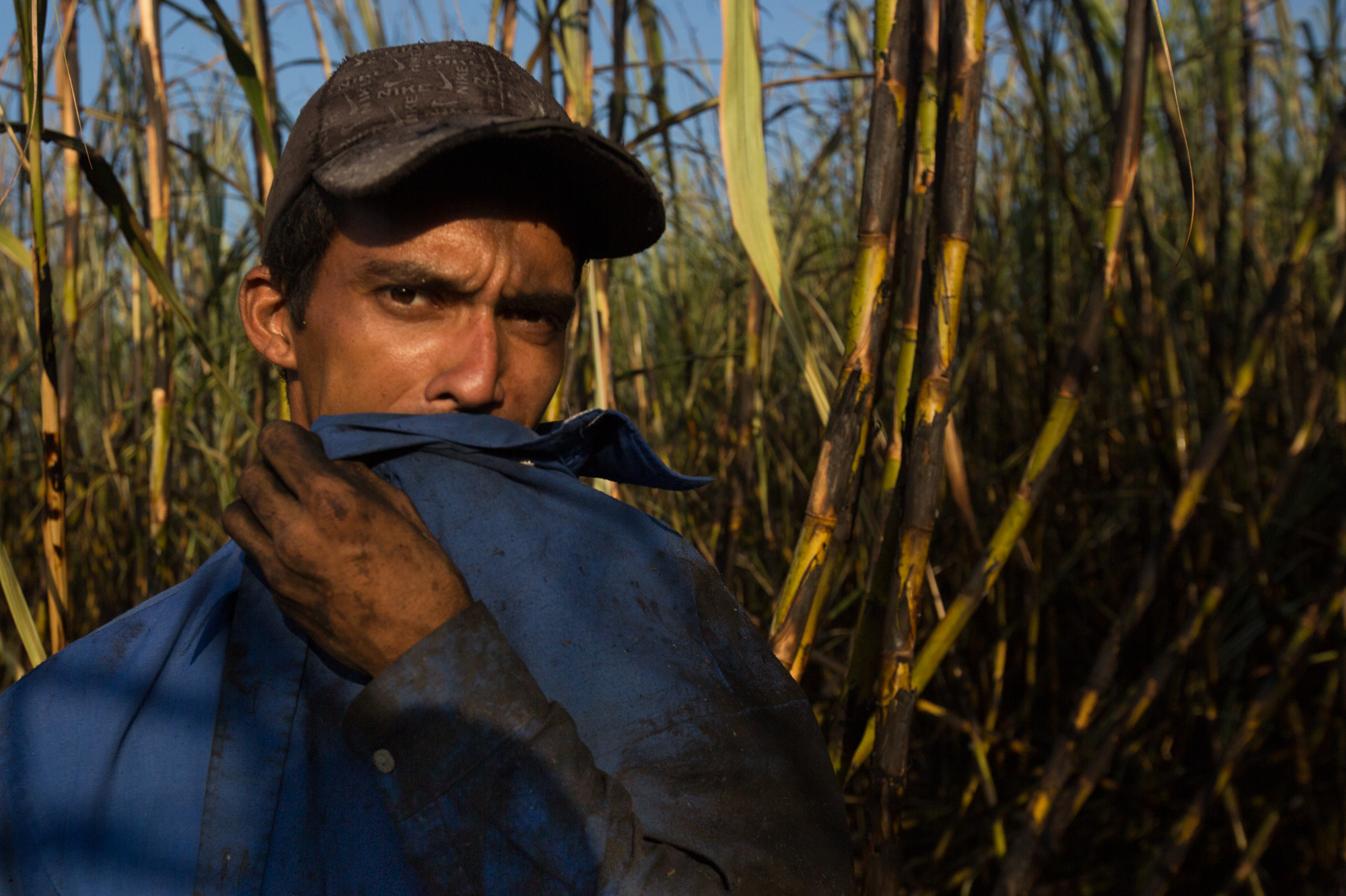 Miguel Abrego Rivera, 32, of Los Almendros, Cuscatlan, El Salvador cuts cane with a new machete as part of the WE Program. He says he can typically cut 10 tons a day with the new one, but today only 5 due to bad conditions of the sugarcane. He finished his studies in accounting but gave up working in the city because he prefers working in the country in agriculture.