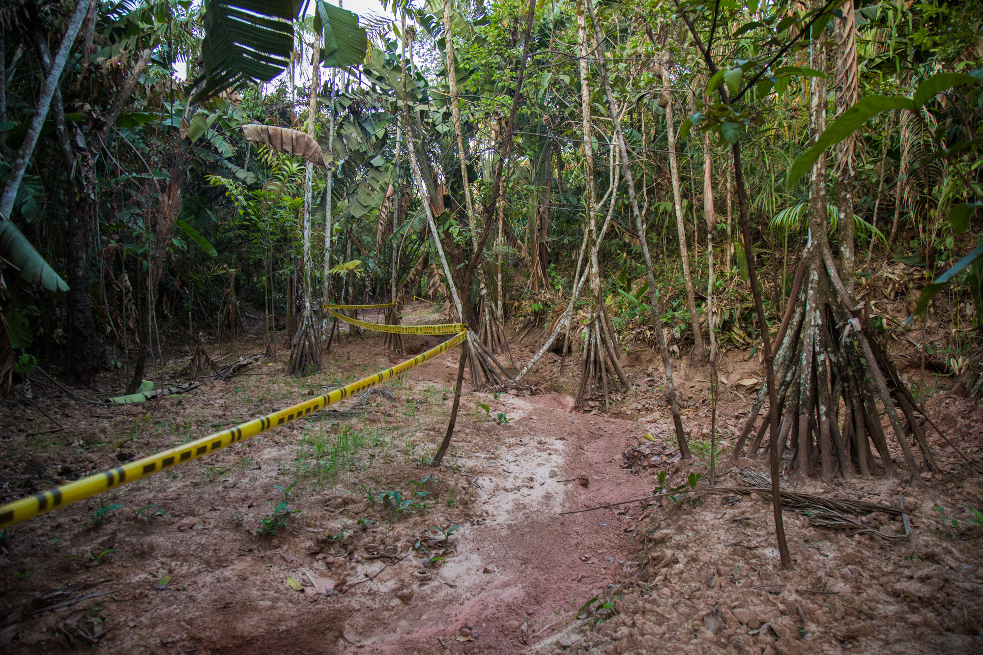 A creek bed caked in oil contamninated mud where an oil spill occured months earlier. Evidence of the spill and subsequent clean up shown by police tape that runs through the dying trees. Rubiales Meta, Colombia. April 9, 2017