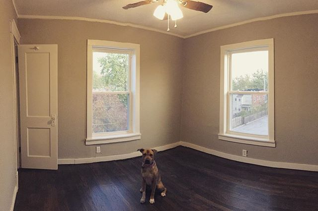 """Every room looks cuter the our """"professional dog model"""" #vedathepup ... check out our bright, clean (and most importantly FINISHED) bedrooms at just over 120 square feet a piece!  We're almost ready for renters! Check them out today! #hexplex #rentkc #restore #renovate #themaydailyproperties"""