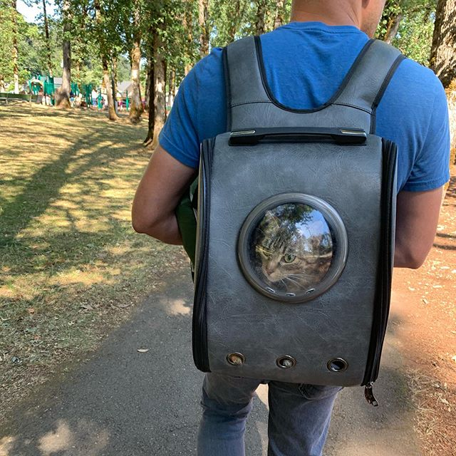 Just another day of Tiger Lily seeing what's new at the park. 🐯 . . #realestatewithdevito #realestateagent #lovewhereyoulive #walkabout #silverton #hangout #chilltime #park #catsofinstagram #catbackpack