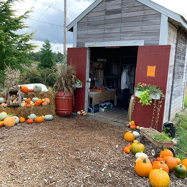 A storm is a brewin' but we got some fresh stuff including pumpkins! 🎃 . . . #realestatewithdevito #realestateagent #lovewhereyoulive #estorganic #supportocal #pumpkins