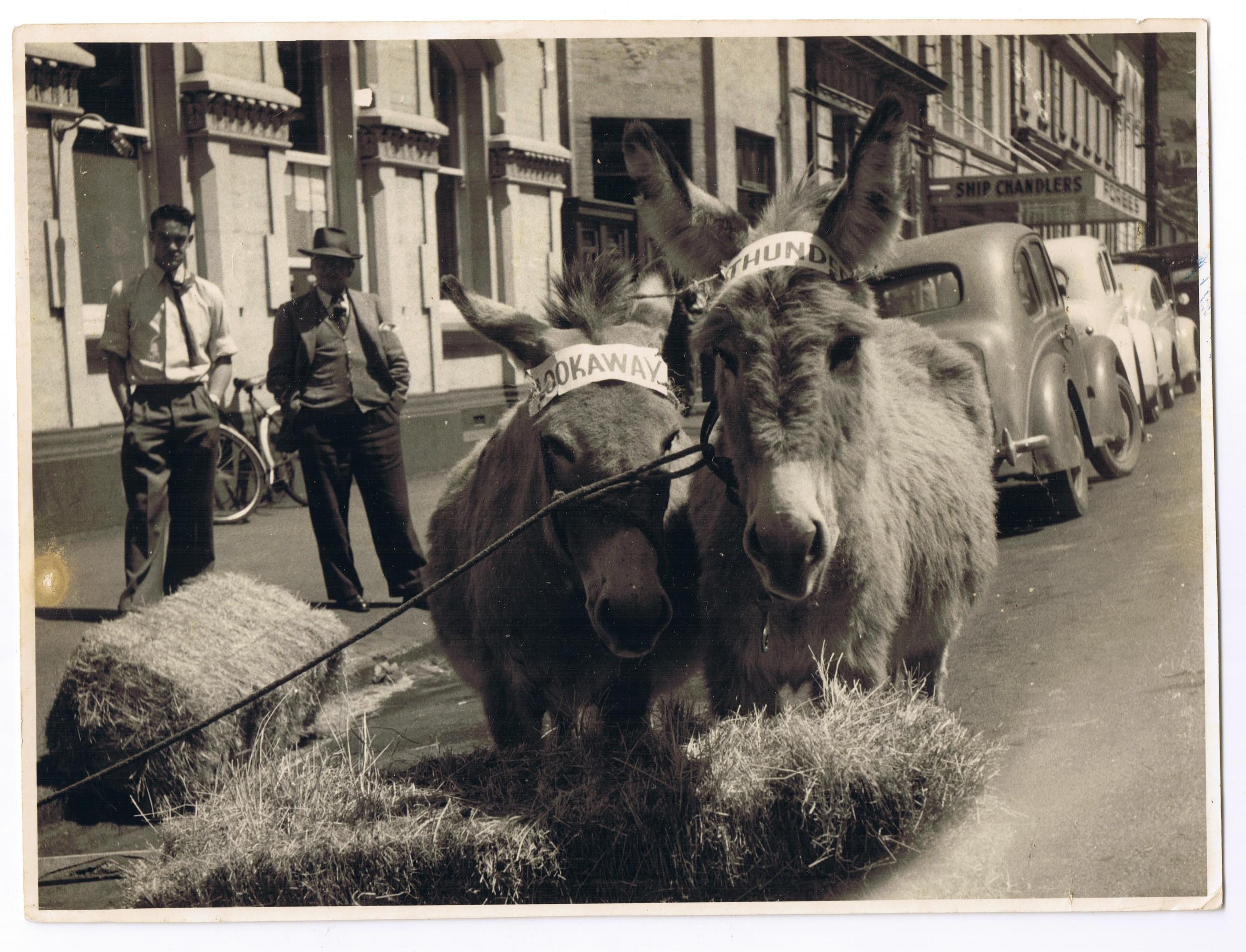 Donkeys festival, 1958