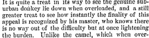 Lyttelton Times   25/10/1864: 5.
