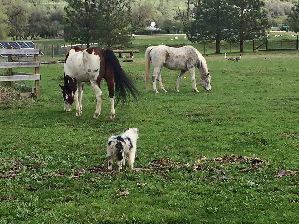 Herd 1.jpg