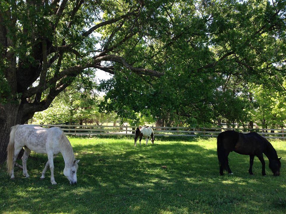 Herd 2.jpg