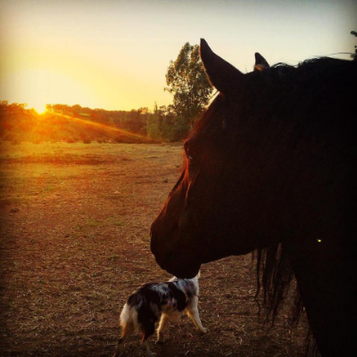 Comache in the sunset.. See Xaria the puppy? ;-)