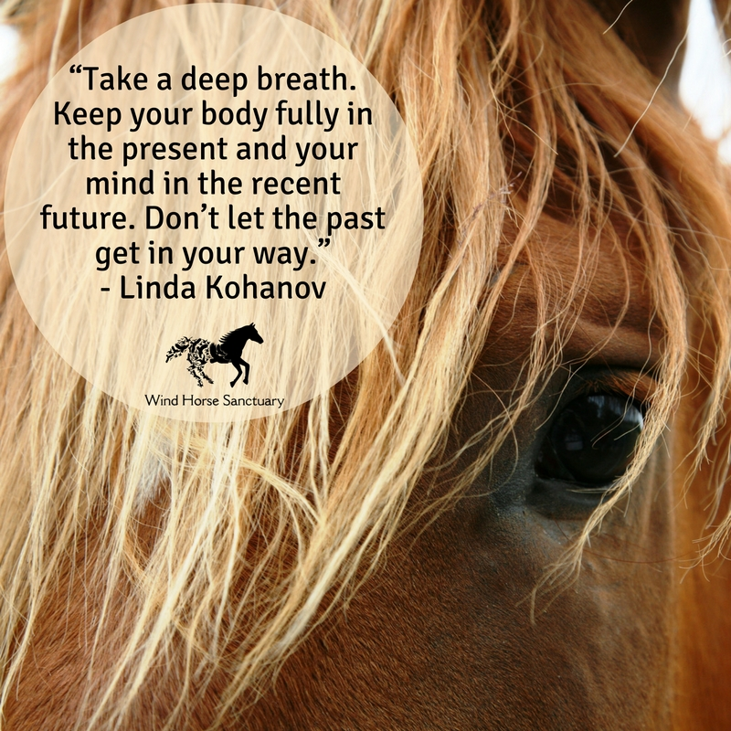 Equine Facilitated Learning - Wind Horse Sanctuary.jpg