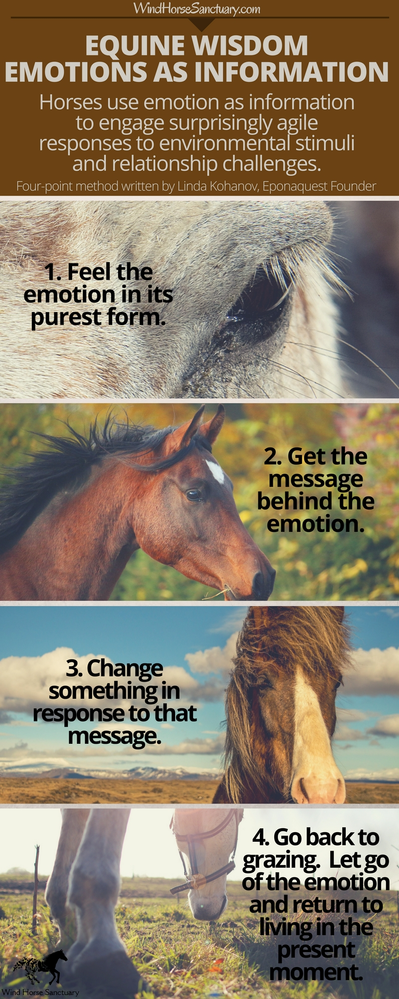 Emotions as Information - Wind Horse Sanctuary Infographic.jpg