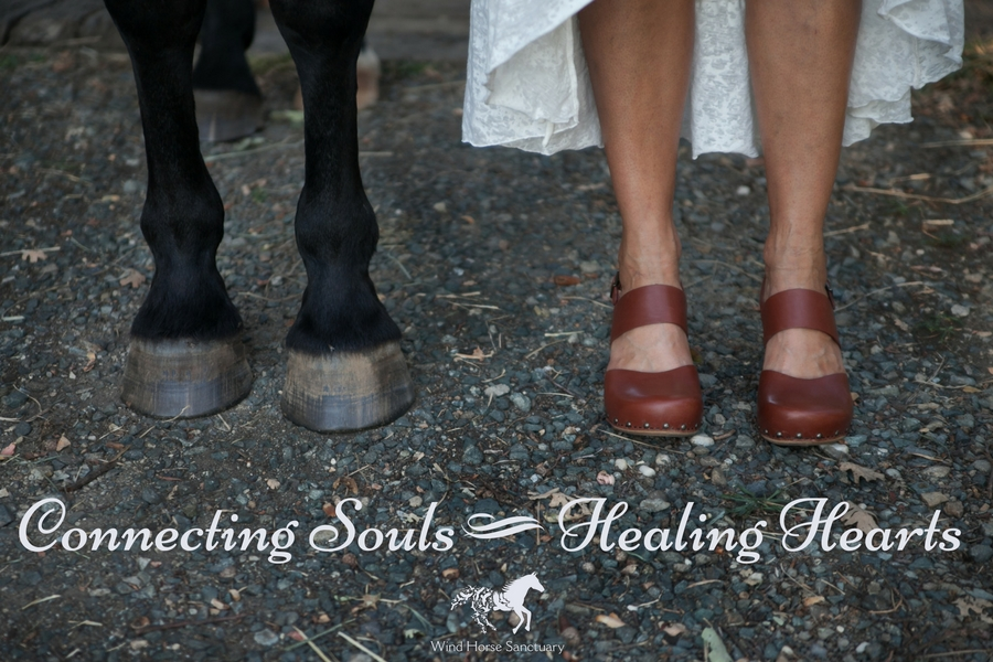 Inspiration - Connecting Souls - Wind Horse Sanctuary.jpg