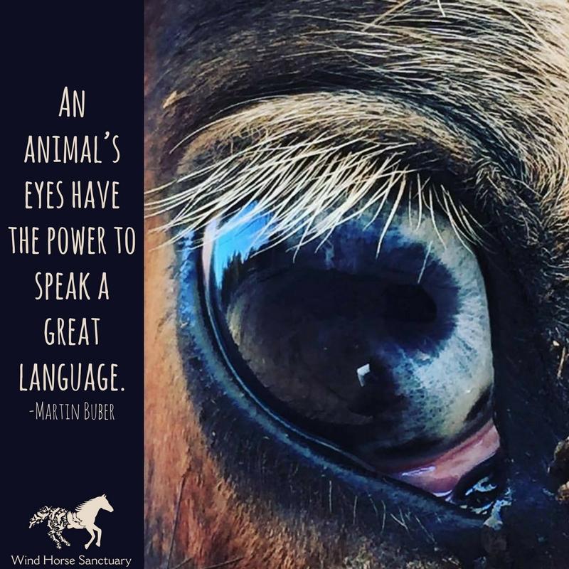 Inspiration - Power of Animals - Wind Horse Sanctuary.jpg
