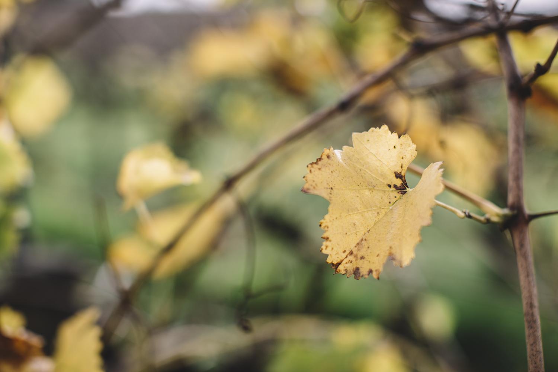 Sandalford Winery Wedding027.jpg