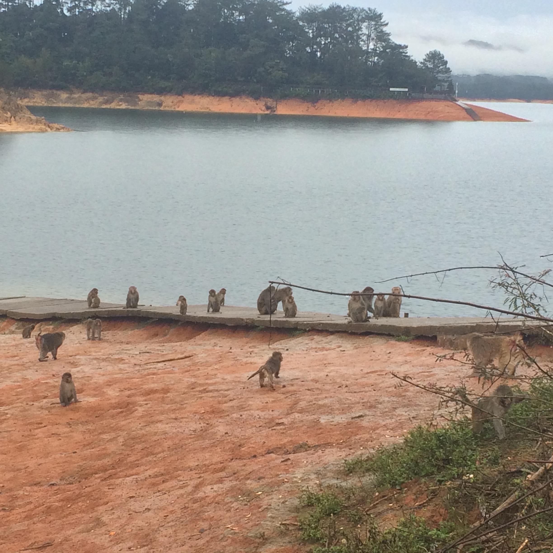 Cong Hua Camp: Monkey Island
