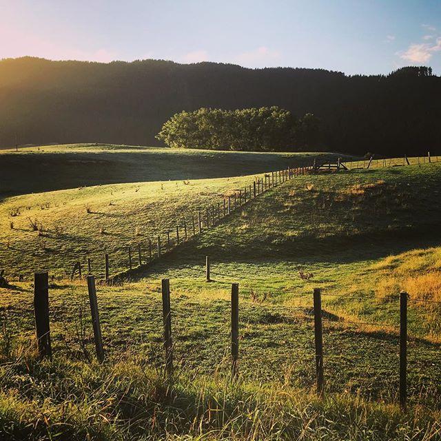 A good morning #NZ