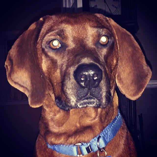 My dog, Jackson.