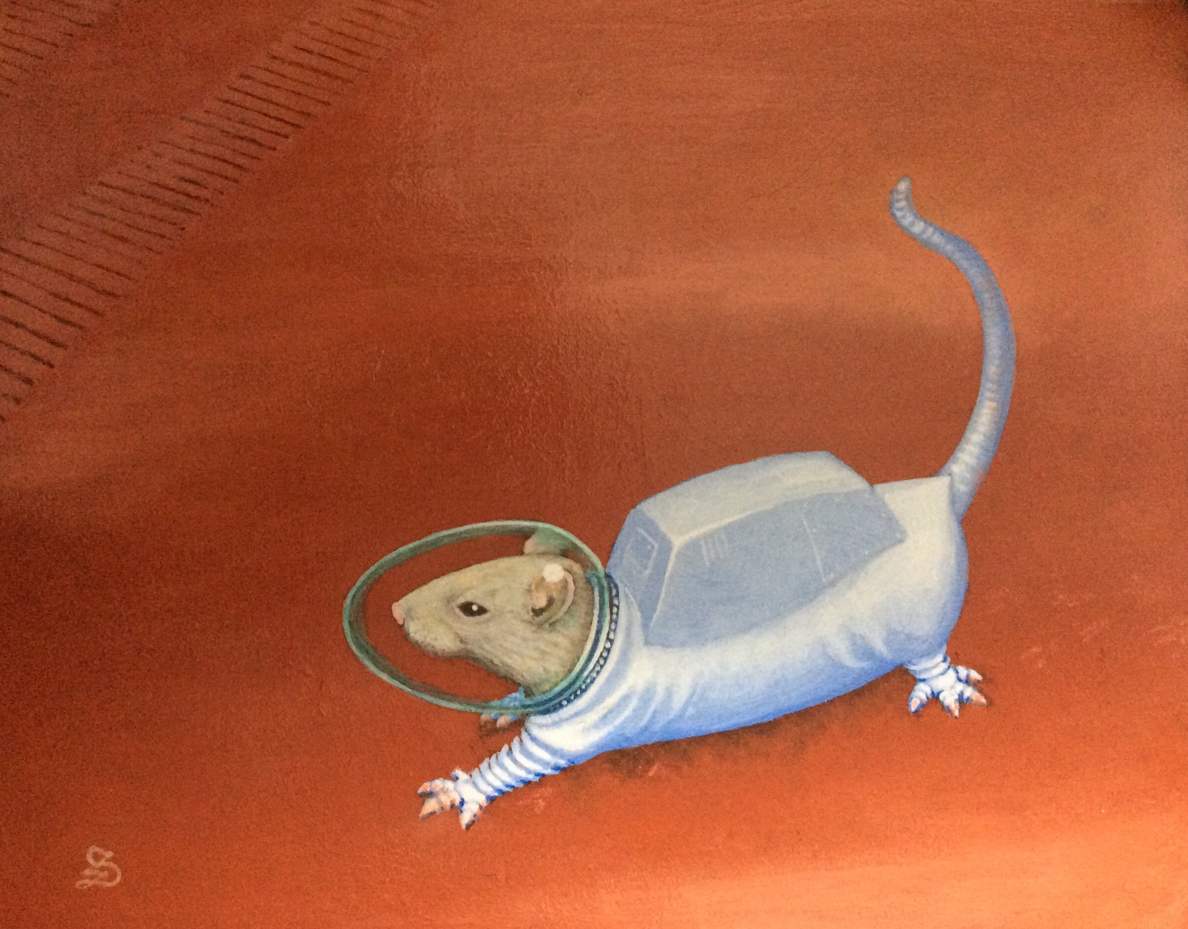 First Rat on Mars