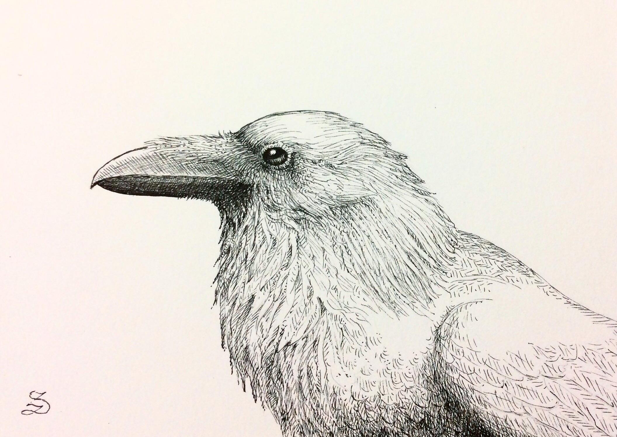 """Raven 5""""x7"""""""