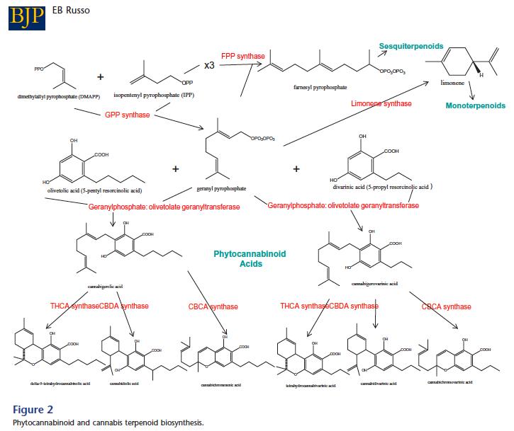 http://www.medicinalgenomics.com/wp-content/uploads/2011/09/phytocannabinoid-terpenoid_2.png