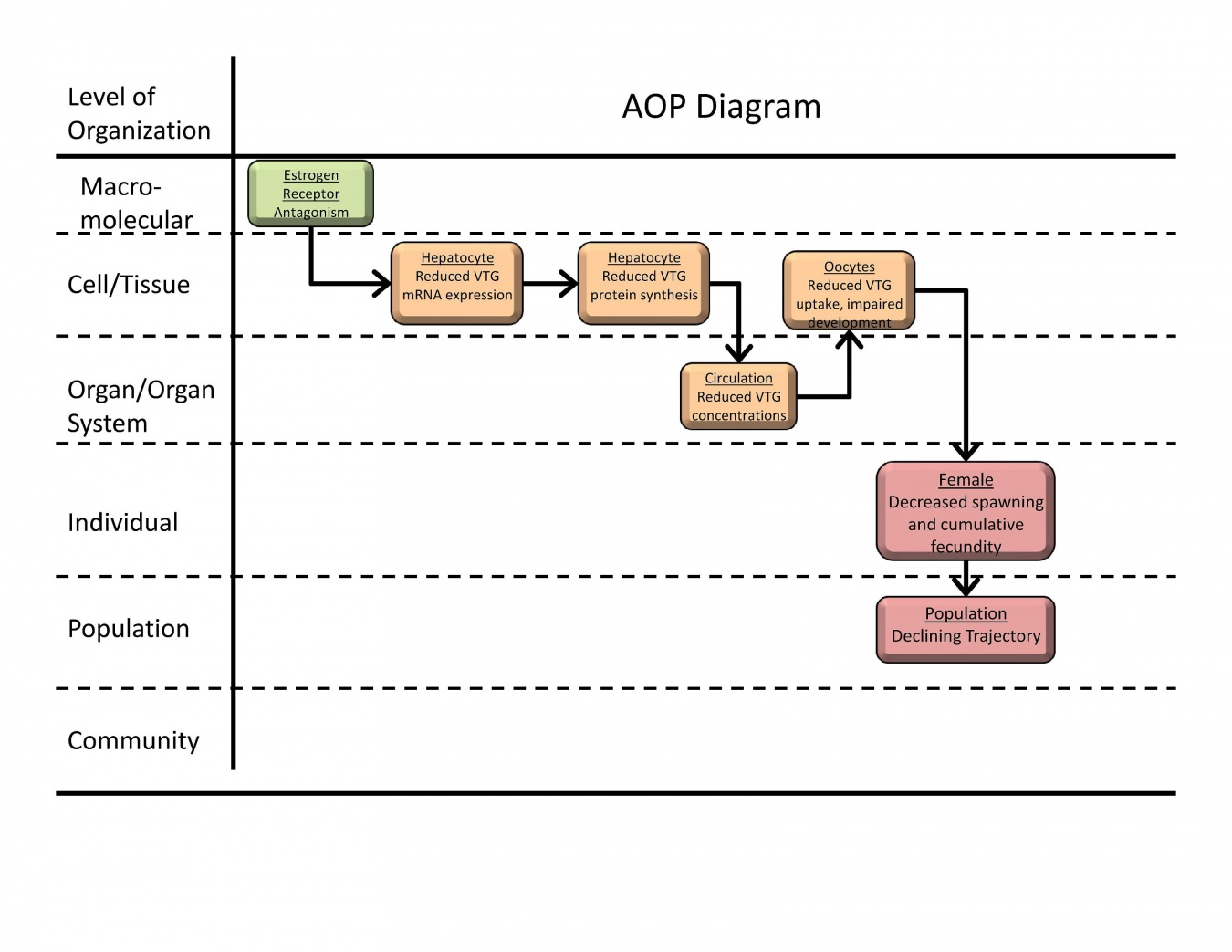 """An example of an AOP from the AOP-Wiki (""""Estrogen receptor antagonism leading to reproductive dysfunction""""). Reproduced from https://aopkb.org/aopwiki/index.php/Aop:30."""
