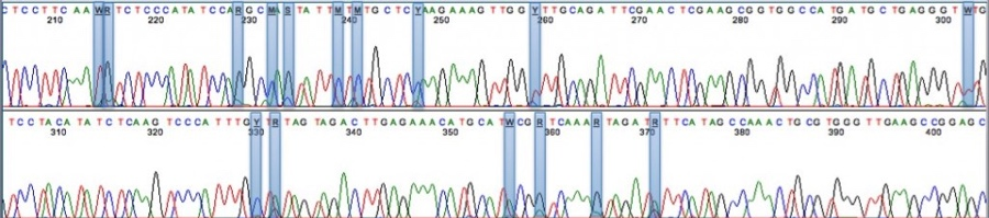This sequencing readout from Medicinal Genomics shows various polymorphisms in the THCA synthase gene, which in part controls genetic variability.