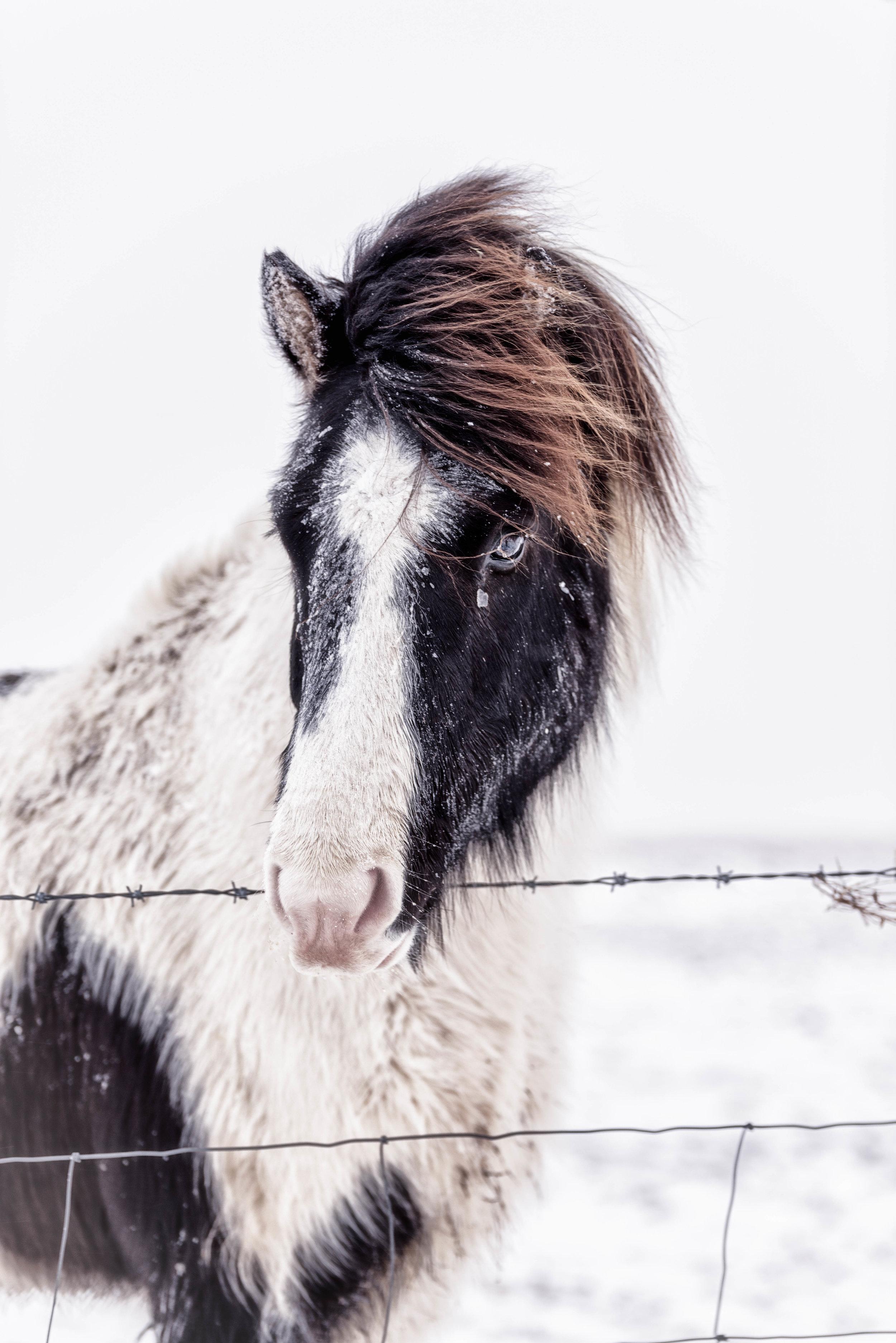 Iceland 2018 - Monday day 2--5.jpg