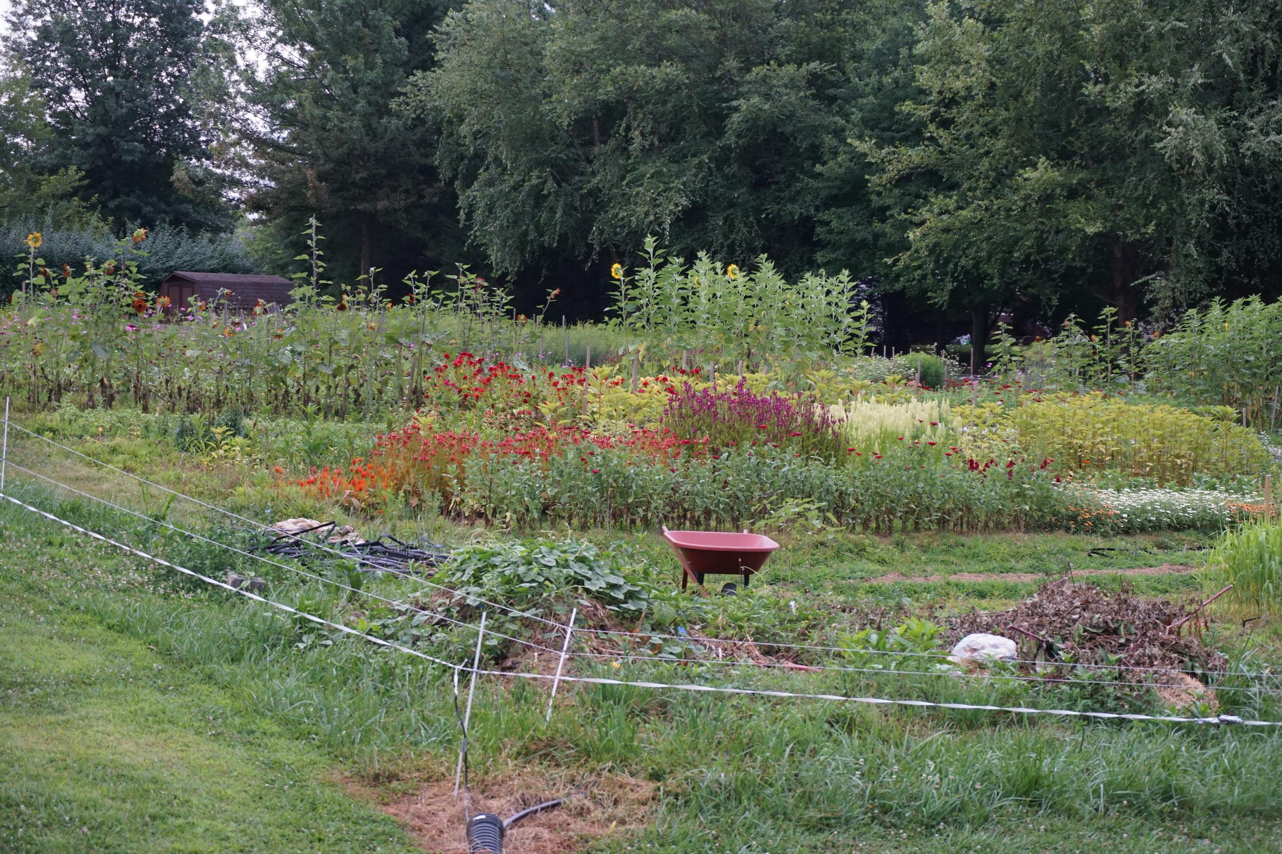 The farm, August 10th