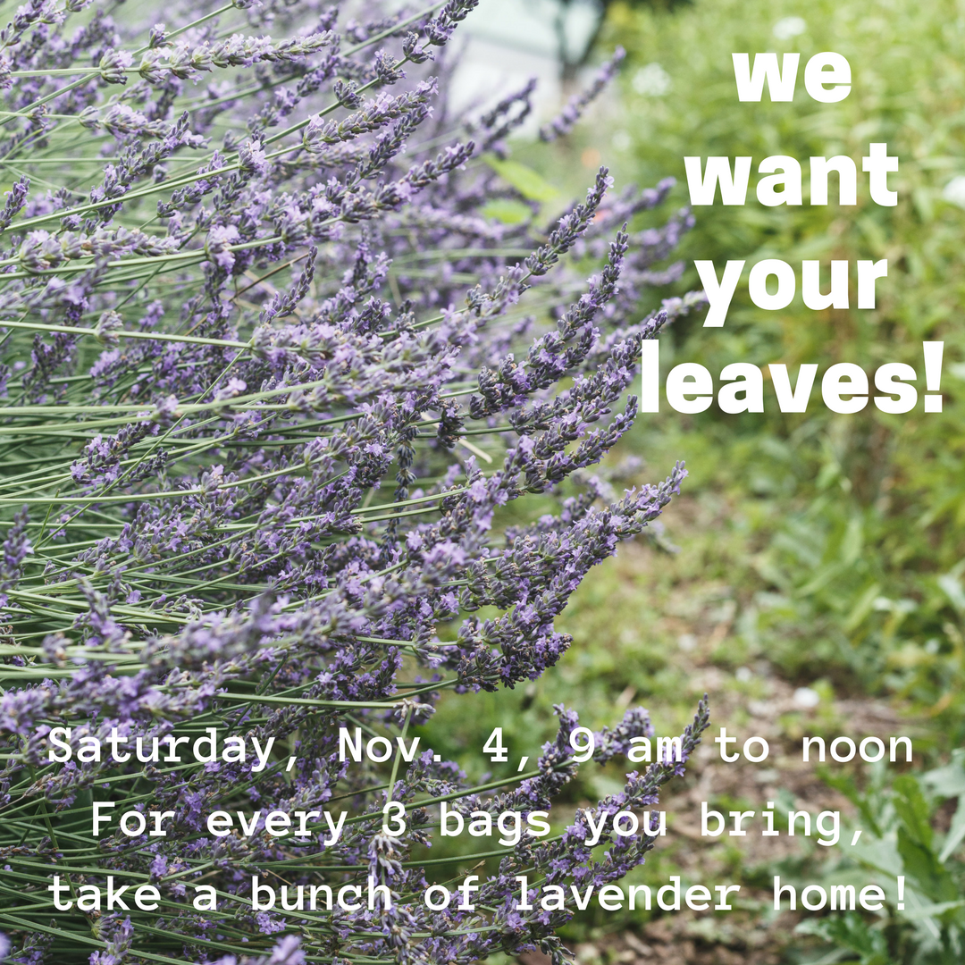 we want your leaves!.png