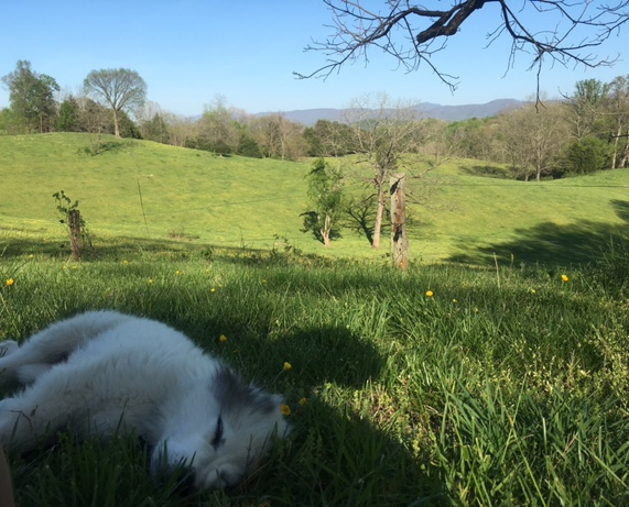 A sleepy Beast on a beautiful day - April 23rd