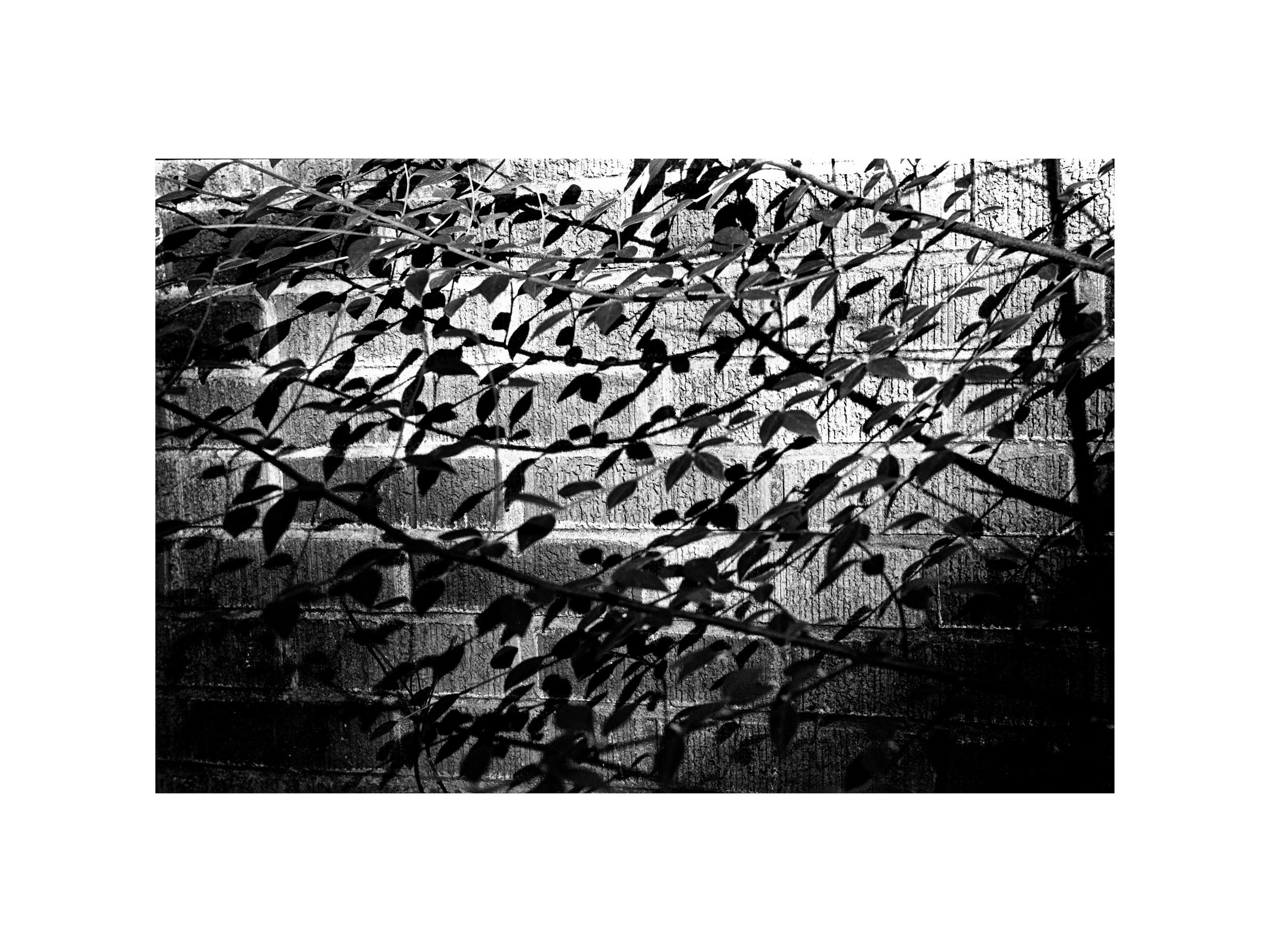 Anthony M. Trujillo Photography-3.jpg